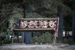 Have a seat and enjoy the tranquility