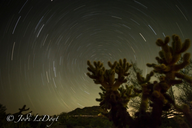 Teddybear Cholla or Jumping Cactus with star trails.